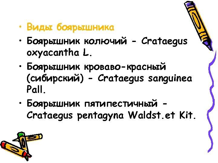 • Виды боярышника • Боярышник колючий - Crataegus oxyacantha L. • Боярышник кроваво-красный