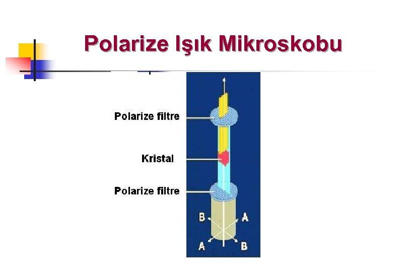 Polarize Işık Mikroskobu