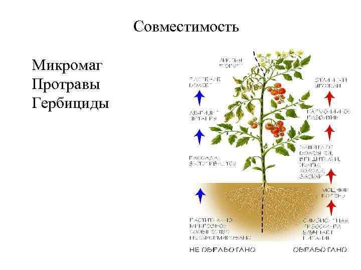 Совместимость Микромаг Протравы Гербициды