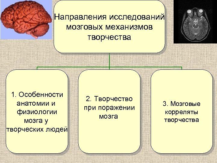 Направления исследований мозговых механизмов творчества 1. Особенности анатомии и физиологии мозга у творческих людей