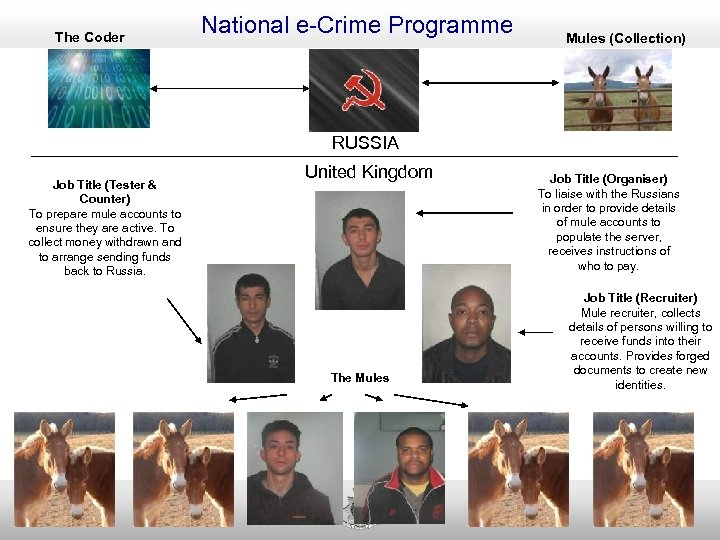 The Coder National e-Crime Programme Mules (Collection) RUSSIA Job Title (Tester & Counter) To