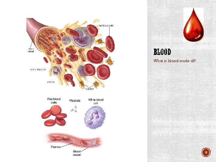 What is blood made of? 8
