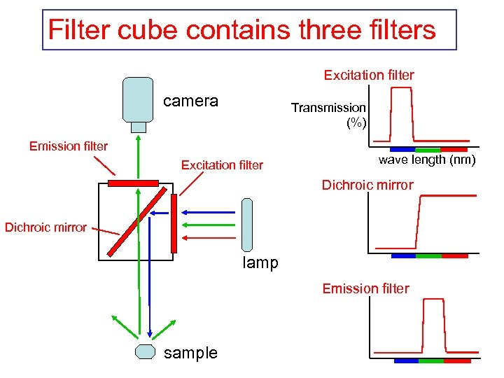 Filter cube contains three filters Excitation filter camera Transmission (%) Emission filter Excitation filter