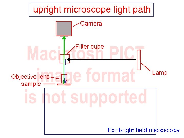 upright microscope light path Camera Filter cube Objective lens sample Lamp For bright field