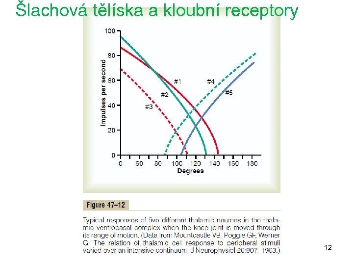 Šlachová tělíska a kloubní receptory 12