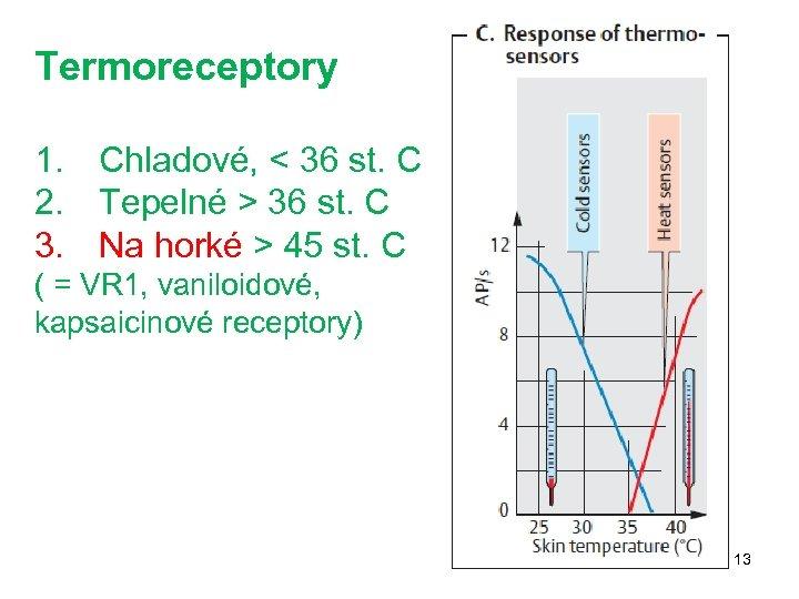Termoreceptory 1. Chladové, < 36 st. C 2. Tepelné > 36 st. C 3.