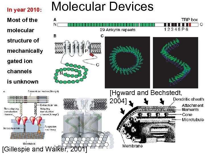 In year 2010: Molecular Devices Most of the molecular structure of mechanically gated ion