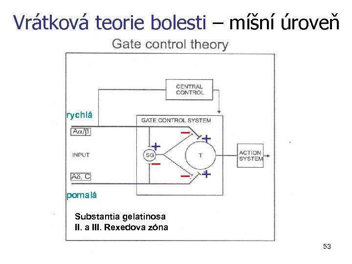 Vrátková teorie bolesti – míšní úroveň rychlá pomalá Substantia gelatinosa III. Rexedova zóna 53
