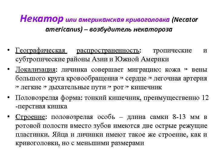 Некатор или американская кривоголовка (Necator americanus) – возбудитель некатороза • Географическая распространенность: тропические и