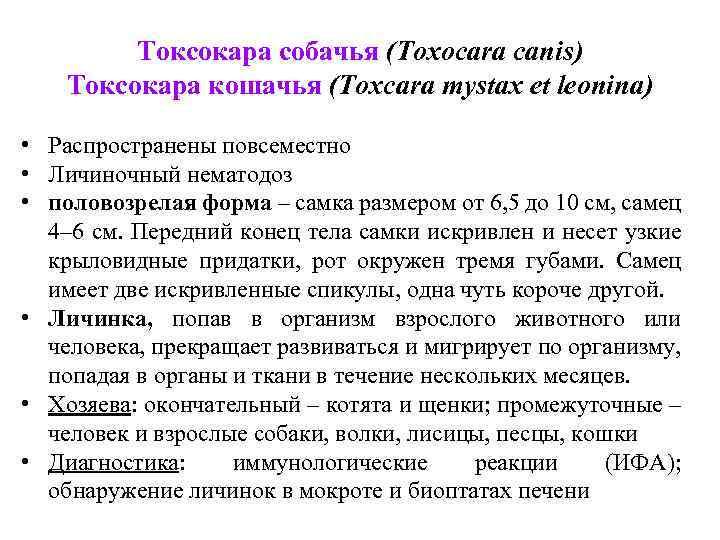 Токсокара собачья (Toxocara canis) Токсокара кошачья (Toxcara mystax et leonina) • Распространены повсеместно •