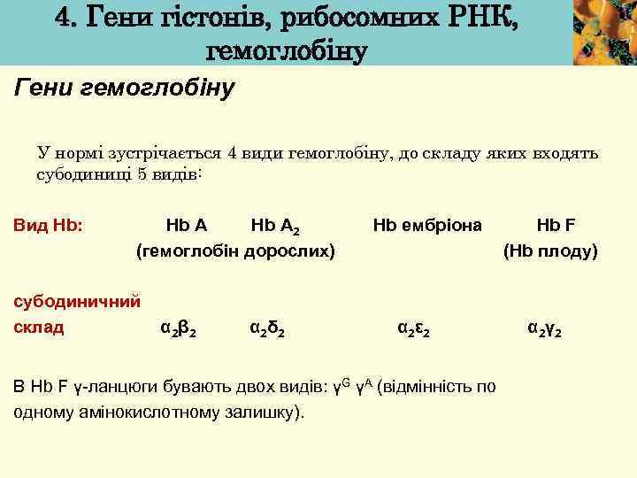 4. Гени гістонів, рибосомних РНК, гемоглобіну Гени гемоглобіну У нормі зустрічається 4 види гемоглобіну,