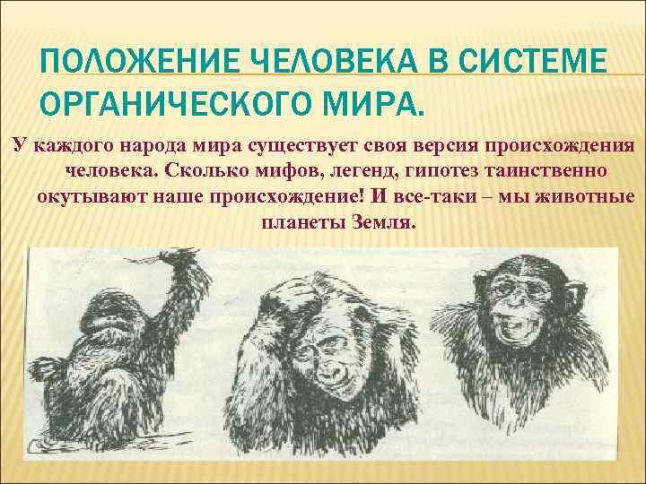 ПОЛОЖЕНИЕ ЧЕЛОВЕКА В СИСТЕМЕ ОРГАНИЧЕСКОГО МИРА. У каждого народа мира существует своя версия происхождения