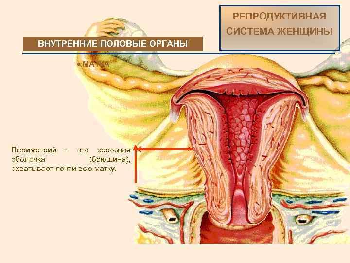 Секс зрелых женщины фото половые органы