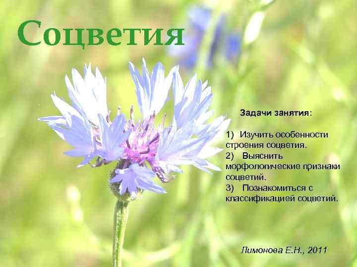 Соцветия Задачи занятия: 1) Изучить особенности строения соцветия. 2) Выяснить морфологические признаки соцветий. 3)