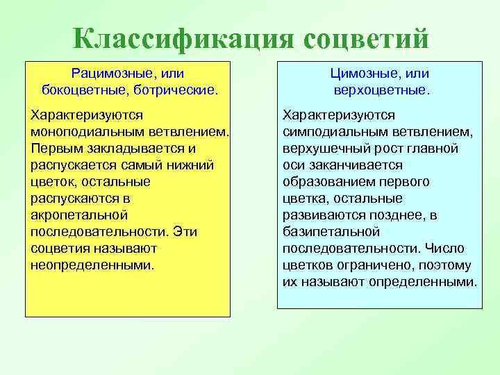Классификация соцветий Рацимозные, или бокоцветные, ботрические. Цимозные, или верхоцветные. Характеризуются моноподиальным ветвлением. Первым закладывается