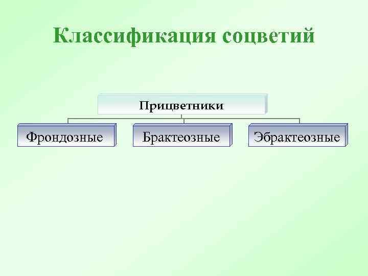 Классификация соцветий Прицветники Фрондозные Брактеозные Эбрактеозные