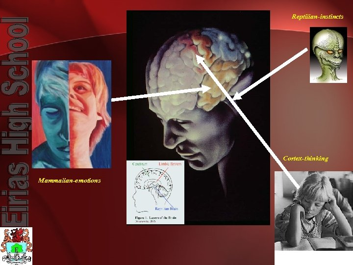 Reptilian-instincts Cortex-thinking Mammalian-emotions