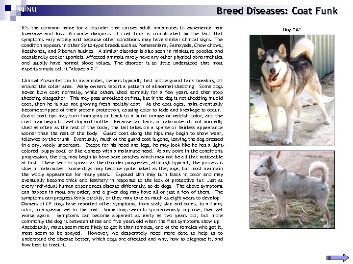 MENU Breed Diseases: Coat Funk It's the common name for a disorder that causes