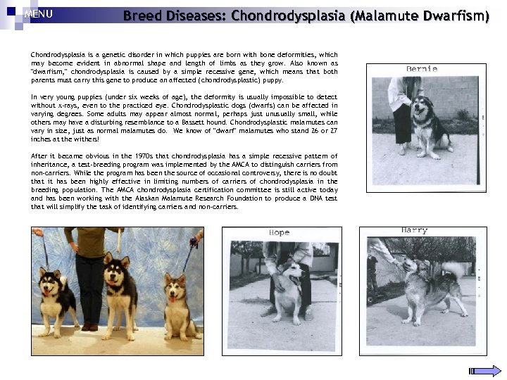 MENU Breed Diseases: Chondrodysplasia (Malamute Dwarfism) Chondrodysplasia is a genetic disorder in which puppies