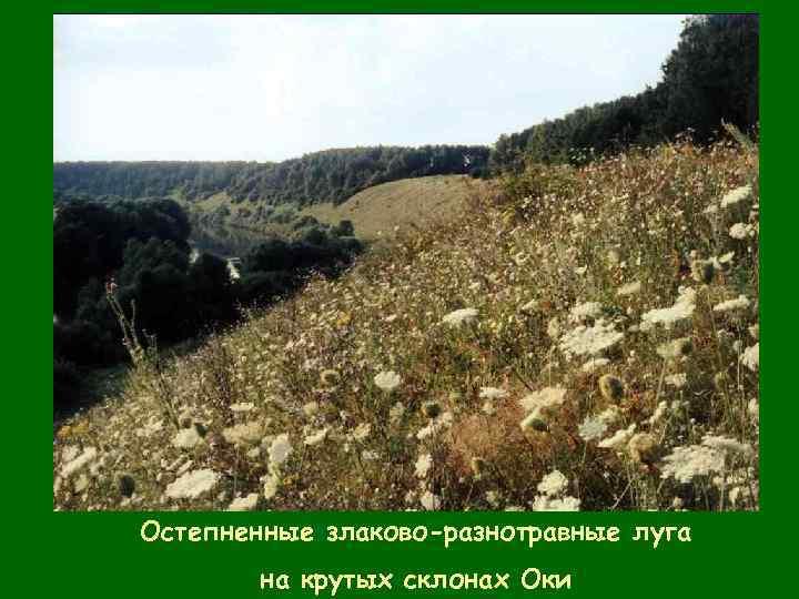 флора тульской области картинки