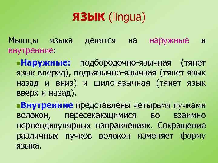 ЯЗЫК (lingua) Мышцы языка делятся на наружные и внутренние: n. Наружные: подбородочно-язычная (тянет язык