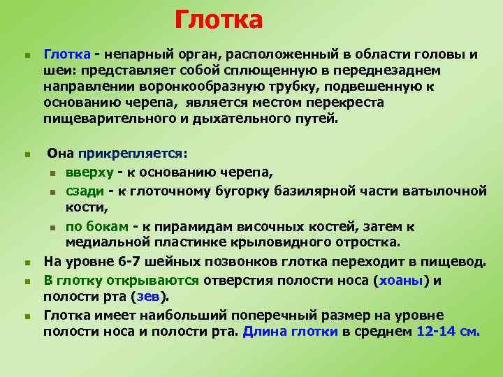 Глотка n n n Глотка - непарный орган, расположенный в области головы и шеи: