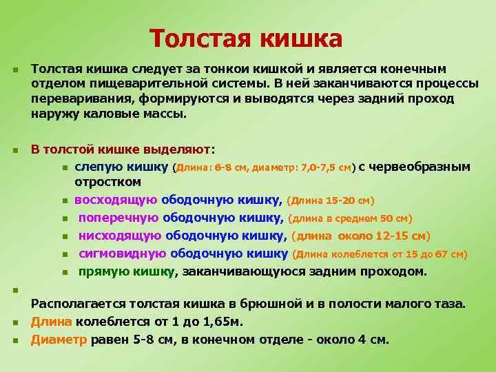 Толстая кишка n n Толстая кишка следует за тонкои кишкой и является конечным отделом