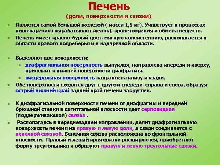Печень (доли, поверхности и связки) n n n Является самой большой железой ( масса