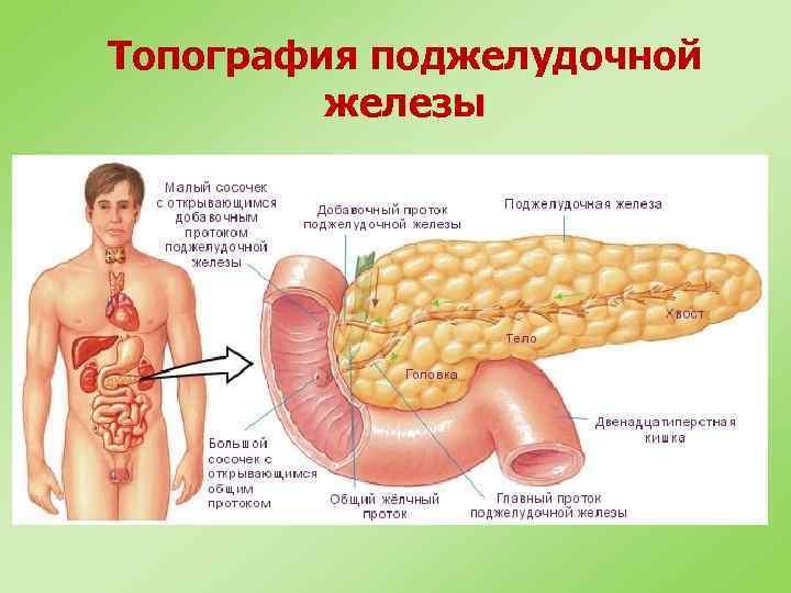Топография поджелудочной железы