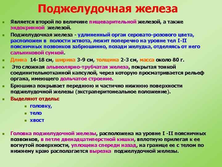 Поджелудочная железа n n n n Является второй по величине пищеварительной железой, а также