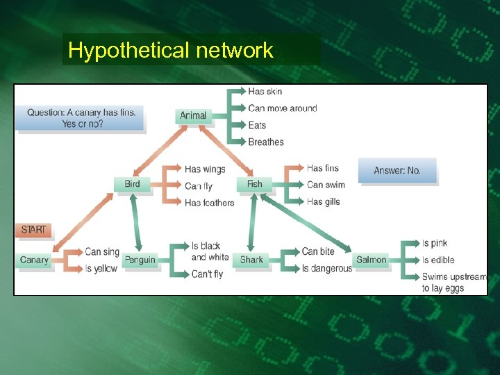 Hypothetical network
