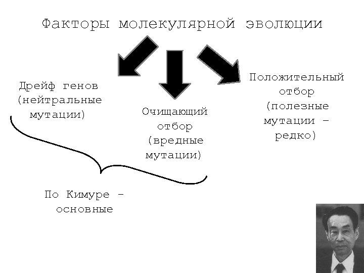 Факторы молекулярной эволюции Дрейф генов (нейтральные мутации) По Кимуре основные Очищающий отбор (вредные мутации)