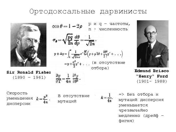 Ортодоксальные дарвинисты p и q – частоты, n - численность (в отсутствие отбора) Sir