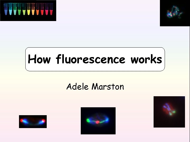 How fluorescence works Adele Marston
