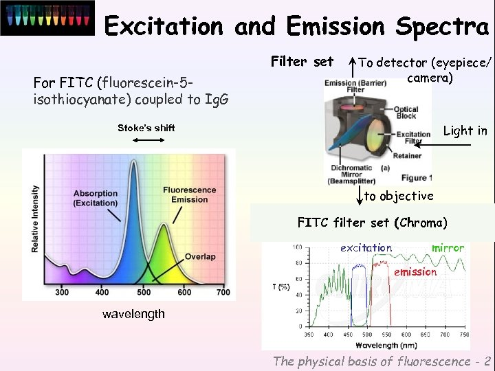 Excitation and Emission Spectra Filter set For FITC (fluorescein-5 isothiocyanate) coupled to Ig. G