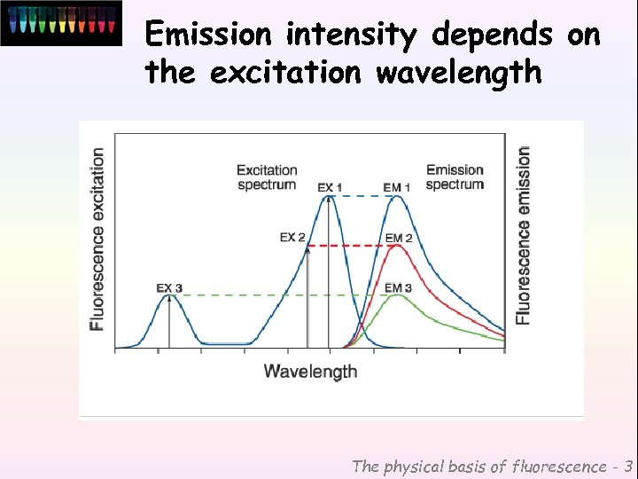 Emission intensity depends on the excitation wavelength The physical basis of fluorescence - 3