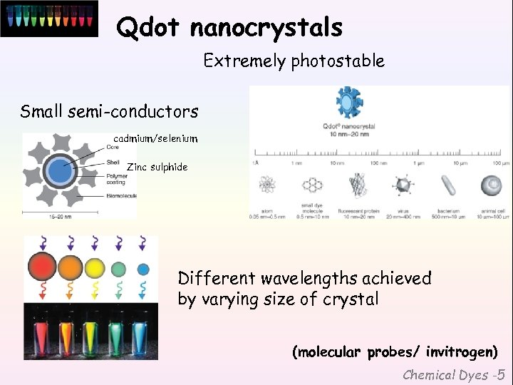 Qdot nanocrystals Extremely photostable Small semi-conductors cadmium/selenium Zinc sulphide Different wavelengths achieved by varying