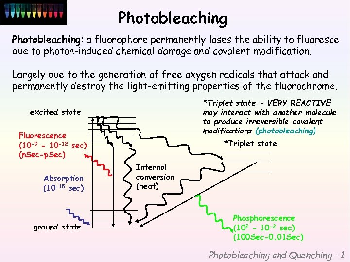Photobleaching: a fluorophore permanently loses the ability to fluoresce due to photon-induced chemical damage