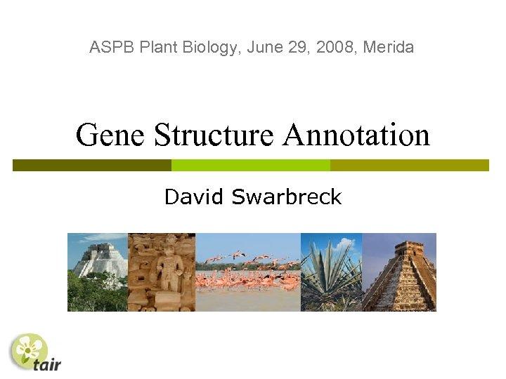 ASPB Plant Biology, June 29, 2008, Merida Gene Structure Annotation David Swarbreck
