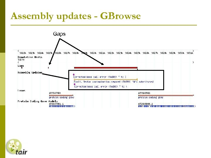 Assembly updates - GBrowse Gaps