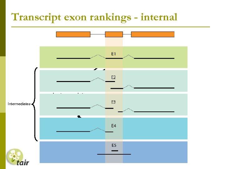 Transcript exon rankings - internal Splice sites confirmed by transcript Intermediates Transcript only overlaps
