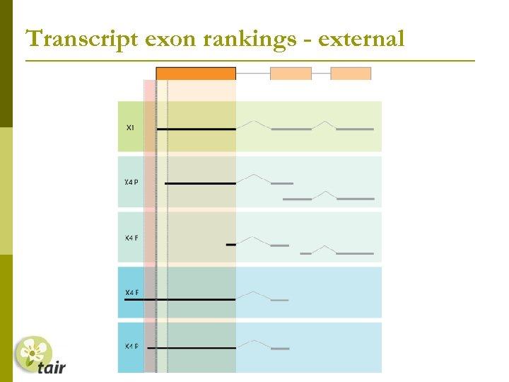 Transcript exon rankings - external