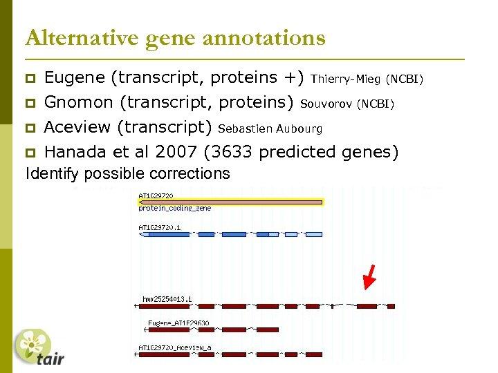 Alternative gene annotations Eugene (transcript, proteins +) Gnomon (transcript, proteins) Aceview (transcript) Thierry-Mieg (NCBI)