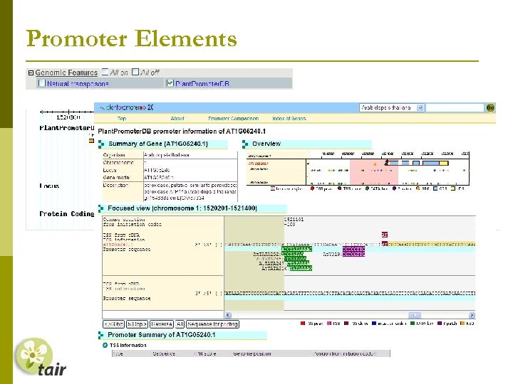 Promoter Elements