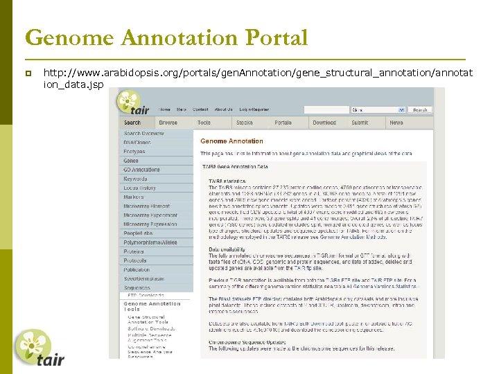 Genome Annotation Portal http: //www. arabidopsis. org/portals/gen. Annotation/gene_structural_annotation/annotat ion_data. jsp