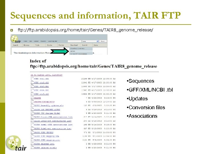 Sequences and information, TAIR FTP ftp: //ftp. arabidopsis. org/home/tair/Genes/TAIR 8_genome_release/ • Sequences • GFF/XML/NCBI.