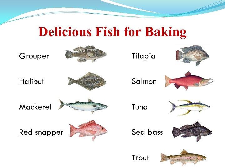 Delicious Fish for Baking Grouper Tilapia Halibut Salmon Mackerel Tuna Red snapper Sea bass