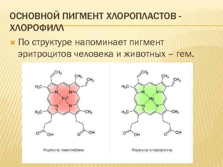 ОСНОВНОЙ ПИГМЕНТ ХЛОРОПЛАСТОВ ХЛОРОФИЛЛ По структуре напоминает пигмент эритроцитов человека и животных – гем.