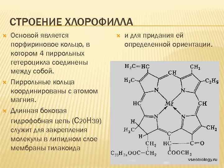 СТРОЕНИЕ ХЛОРОФИЛЛА Основой является порфириновое кольцо, в котором 4 пиррольных гетероцикла соединены между собой.