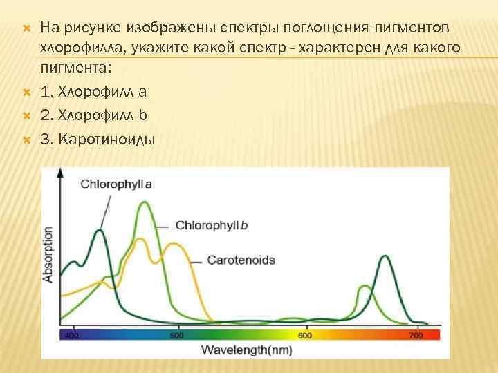На рисунке изображены спектры поглощения пигментов хлорофилла, укажите какой спектр - характерен для
